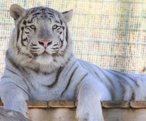 2.Sendaviva-Tigre_MG_5895-2