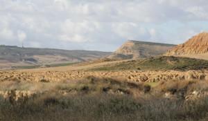 vegetacion-de-las-bardenas