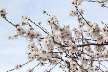 Cartel-Conocer-Plantas-Medicinales-16.04.16-2