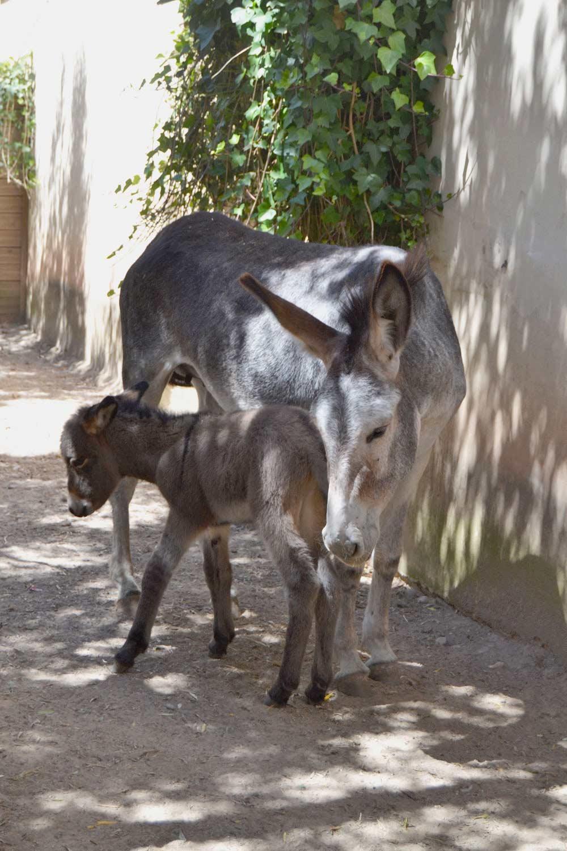 Sendaviva-Hijo-de-Palmira-3-de-agosto2