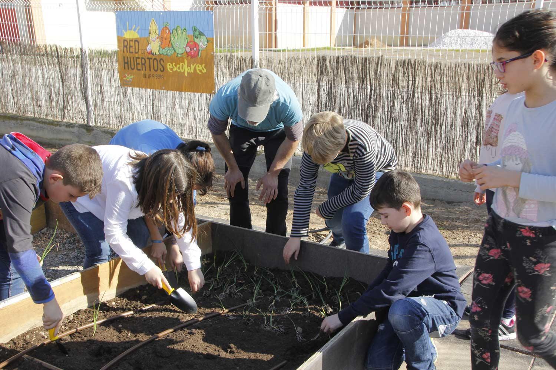 Huerto-Colegio-Arguedas-2017-010-_MG_0056
