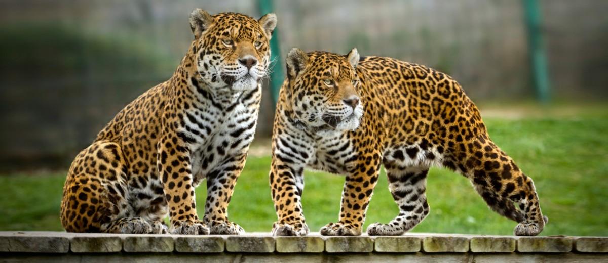 Sendaviva-Jaguares-Arguedas