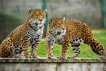 Sendaviva Jaguares Arguedas
