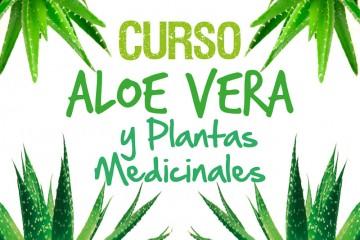 Aloe-Vera-Arguedas-2