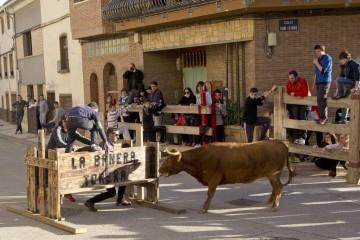 Vacas Juventud Arguedas   IMG