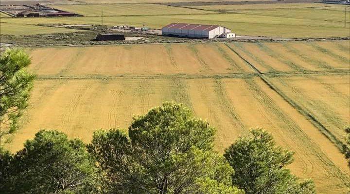 El Raso Alquiler tierras