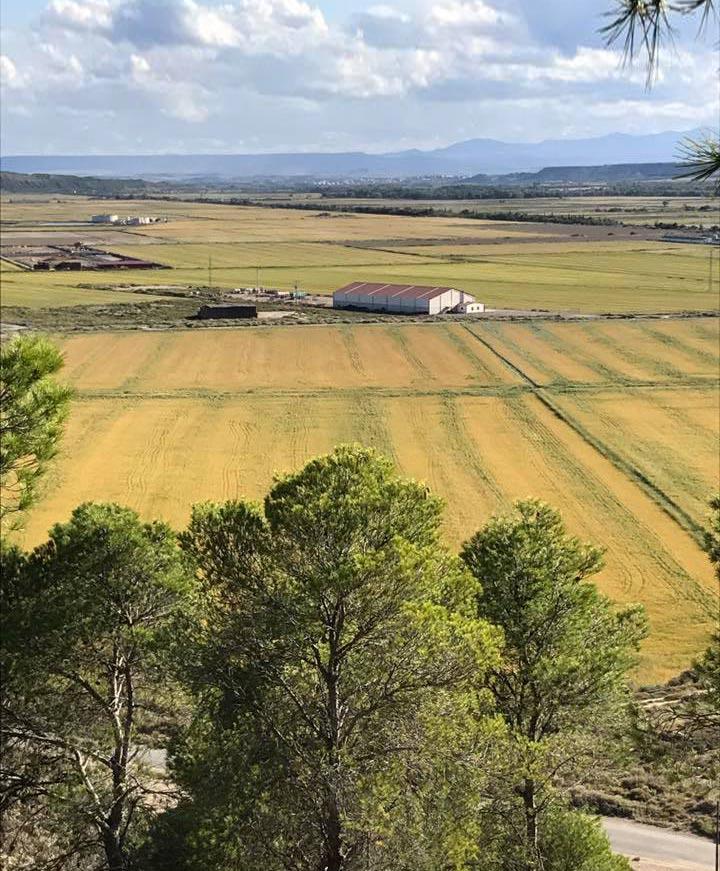 El-Raso-Alquiler-tierras