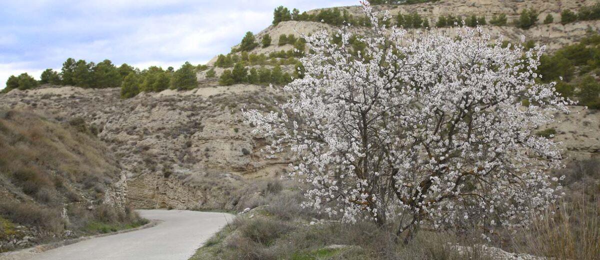 Arguedas Primavera