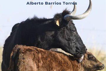 Desatcada-Exposición-Alberto-Barrios